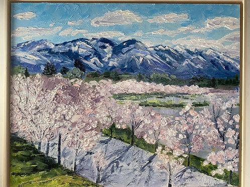 SLC Cherry Blossoms