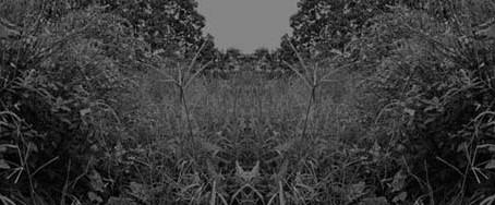 Regina Johas: jardins circulares