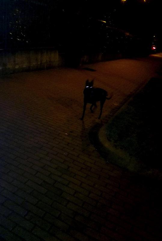 dog, night