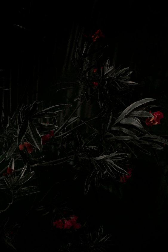 flowers5 copiasito.jpg