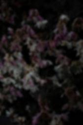 Flowers2trutt.jpg