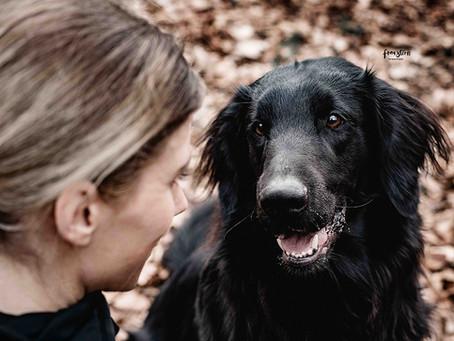 Gedanken zum Umgang mit unseren Hunden