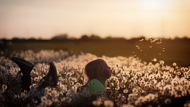 Sunset, girl, field, playing, flowers, nature, leisure, childhood