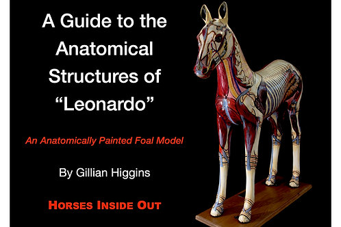 A Guide to the Anatomical Structures of Leonardo: Anatomically Painted Foal Mode