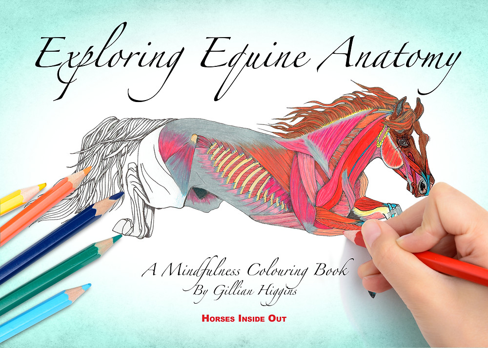 horse mindfulness colouring book, exploring equine anatomy, muscles, skeleton, bones, tendons, ligaments, adult colouring coloring book