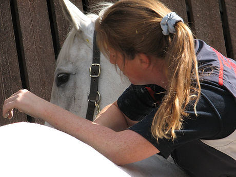 equine myofascial chains, myofascial release techniques, soft tisse release therapy for horses, cpd course for equine therapy professionals with Gillian Higgins anatomist