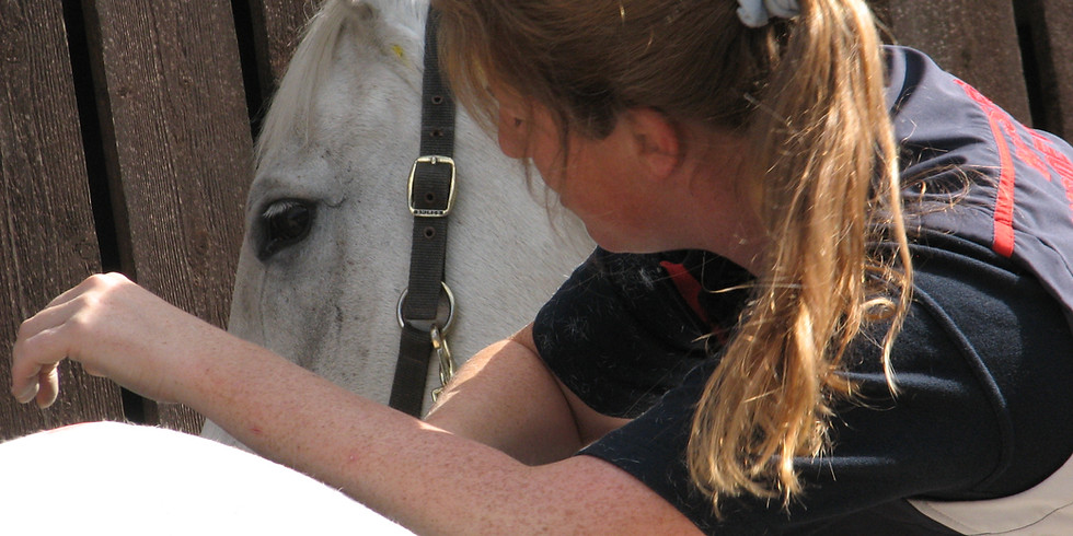 Equine Therapist CPD: Myofascial Chains and Techniques