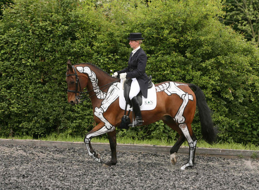 Training Your Horse from the Anatomical Perspective. Part 2: Engagement
