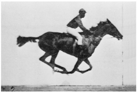 horse galloping, moment of suspension, paces, locomotion