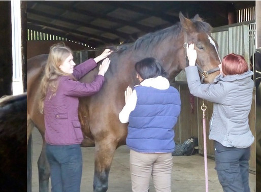 The Benefits of Continual Personal and Professional Development for Equestrian Professionals