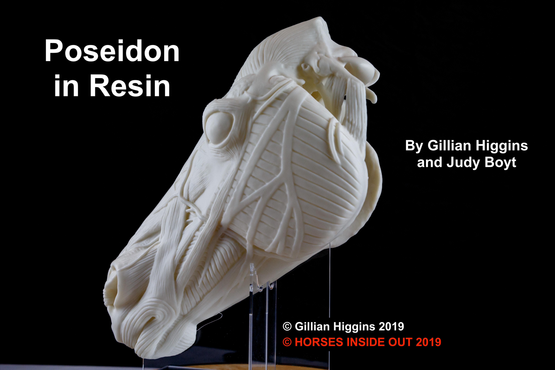 Poseidon Anatomical Horse Head Sculpture Horses Inside Out Uk