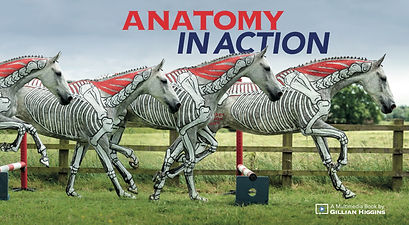 Equine anatomy in action video course in horse biomechanics