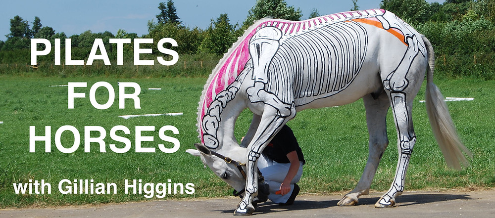 Pilates for horses, carrot stretches, core stability, back flexion equine