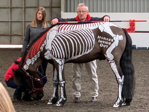 Icelandic Horses Inside Out