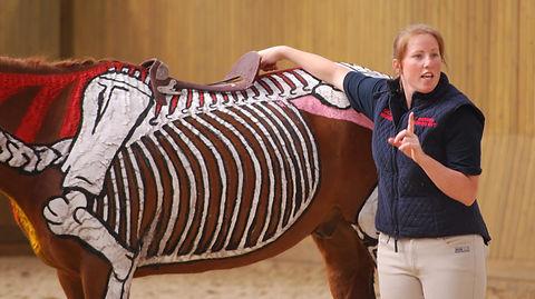 saddle fit design anatomy biomechanics skeleton saddle tree correct position of the saddle last rib throracic vertebrae, gullet, horse saddle rider interaction