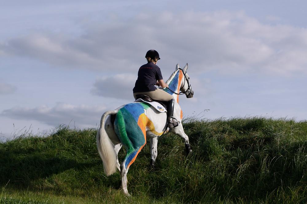 equine hillwork, horse training, hills, hamstrings, biceps femoris, semitendinosus, semimembranosus, deep digital flexor muscle, gluteals, longissimus dorsi, strength training