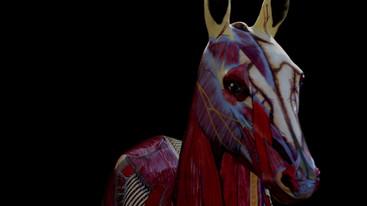 Gillian Higgins, anatomical artist paints a foal