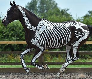 skeleton maturity, young horses, backing, starting, webinar