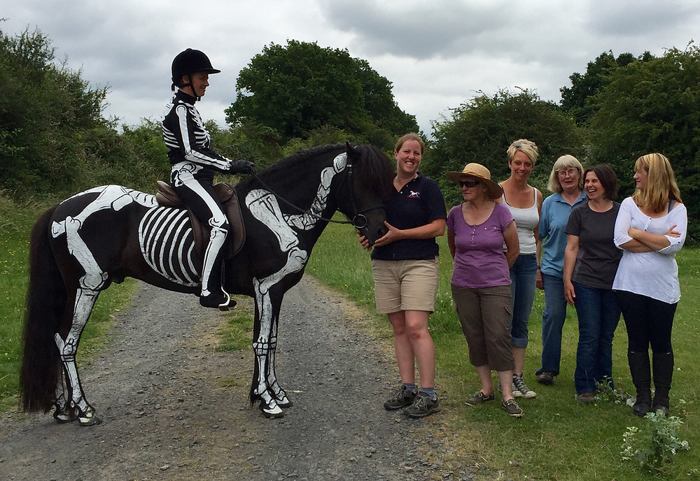 Icelandic horse skeleton, biomechanics, locomotion