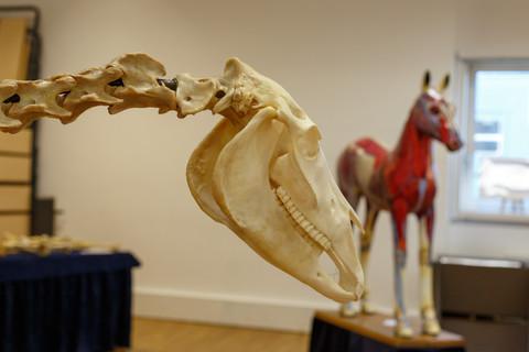 Anatomy Exhibition 2018