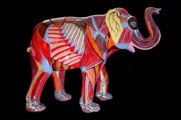 Elephant Inside Out