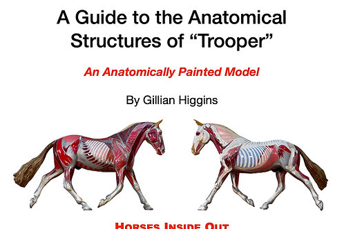 A Guide to the Anatomical Structures of Trooper: An Anatomically Painted Model