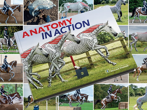 ANATOMY IN ACTION - THE COMPLETE COLLECTION