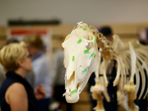 Success at 2020 Anatomy Exhibition