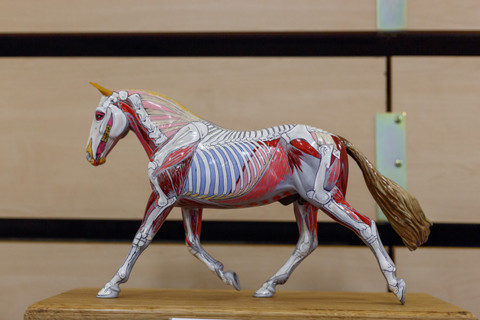 'Trooper' a model horse anatomically painted by Gillian Higgins