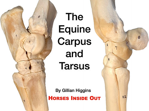 The Carpus and Tarsus