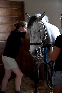 equine physiotherapy, veterinary physiotherapy, massage, myofascial therapy, horse joint mobilisation and manipulation, posture, assessent, muscle therapy, soft tissue release, vertebral alignment, spinal alignment