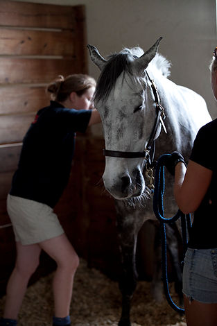 Gillian Higgins is a professionally qualified Equine therapist. Here she is treating a horse with myofascial release techniques.
