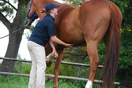 Pilates for Horses with Gillian Higgins abdominal recruitment to improve posture