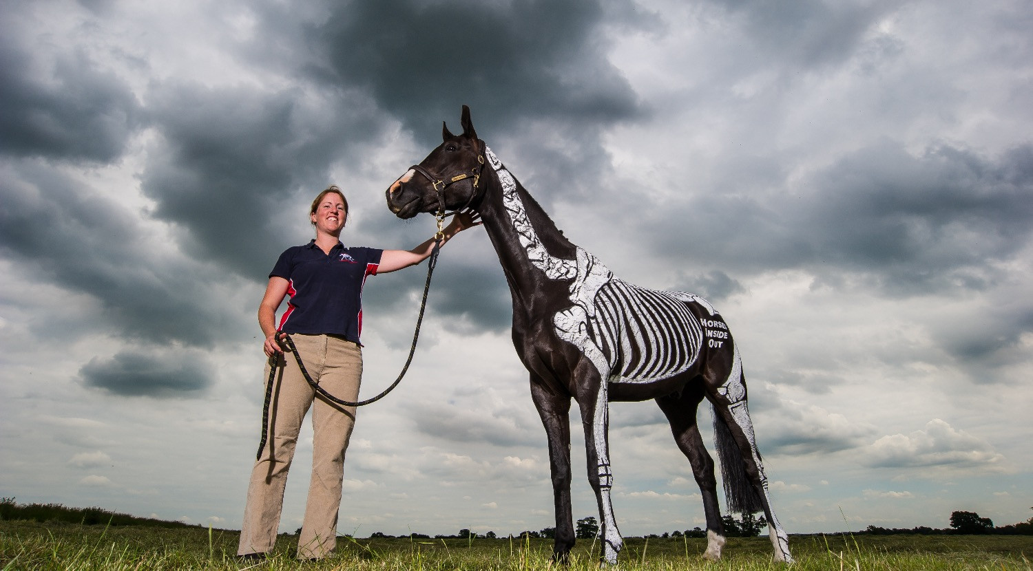 Gillian Higgins and Horses Inside Out