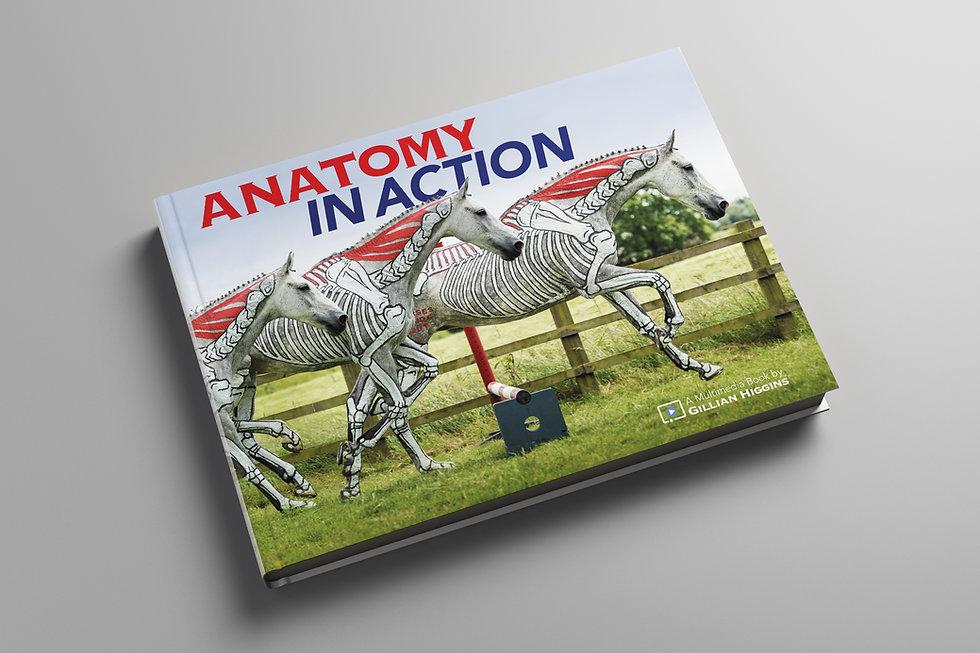 Horse anatomy in action, biomechanics equine, skeletal biomechanics, nuchal ligament, rider,