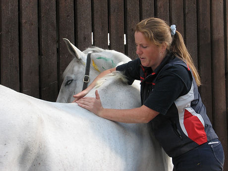 Gillian Higgins assessing horse back health and function