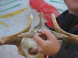 joint mobilisation, sacroiliac joint, musculoskeletal testing, bones