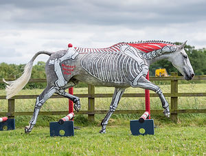 Horse Artistic Flair, Star of Anatomy in Action, anatomically painted horse for Horses Inside Out
