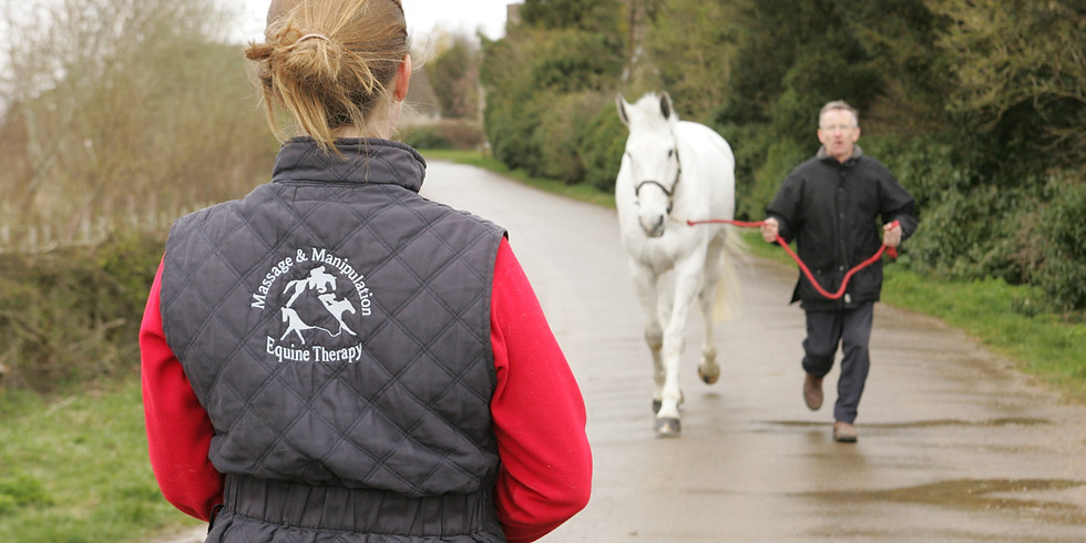 Equine Therapist CPD: Assessing Posture and Movement
