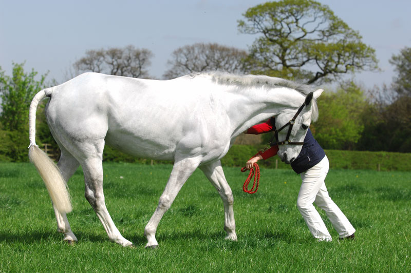 horse backing up, equine pilates for horses, back mobilisation exercise, abdominal recruitment,