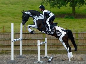 Skeleton Horse and Rider Anatomy