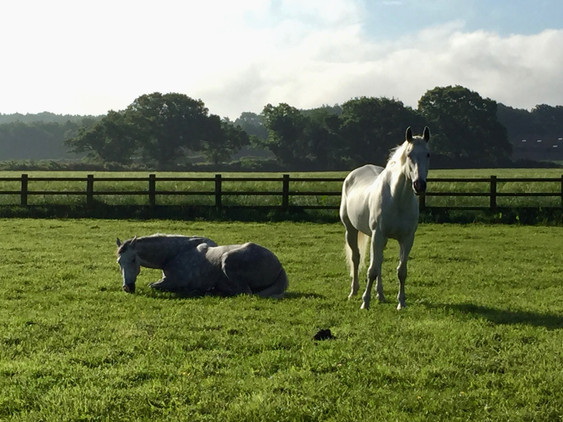 Relaxation Time at Horses Inside Out
