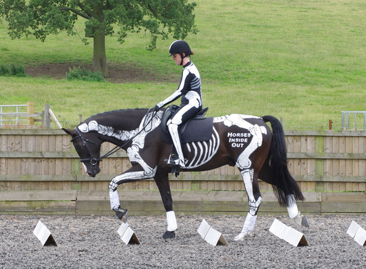 Training Your Horse from the Anatomical Perspective. Part 1: Hollow Back Posture