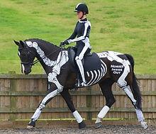 Anatomy and biomechanics of dressage, horse, saddle and rider interaction, trot