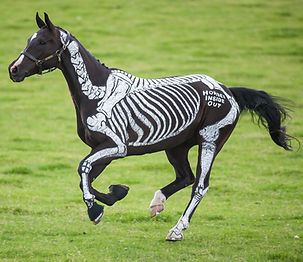 Skeleton painted on horse cantering. Biomechanics of canter, free, wild, moment of suspension