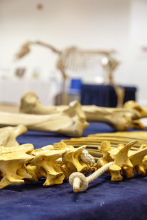 Study the bones of a horse well... and they will tell you a story!