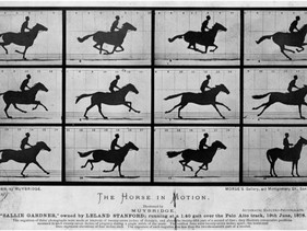 Equine Movement and Muybridge