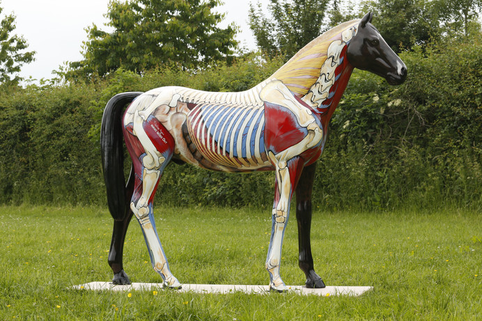 Anatomy for Redwings Horse Sanctuary