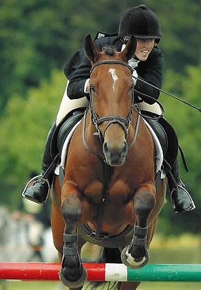 Horse Jumping Bioimechanics