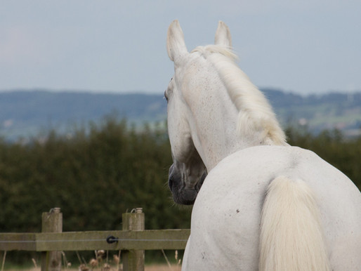 Coronavirus Restrictions: Advice for Horse Owners